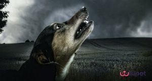 دلیل پارس کردن سگ ها در شب چیست؟