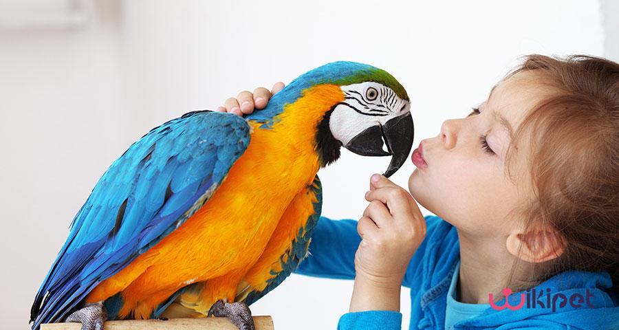 8 بیماری شایع در پرندگان خانگی
