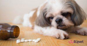 داروهای ممنوعه برای سگ و گربه ها