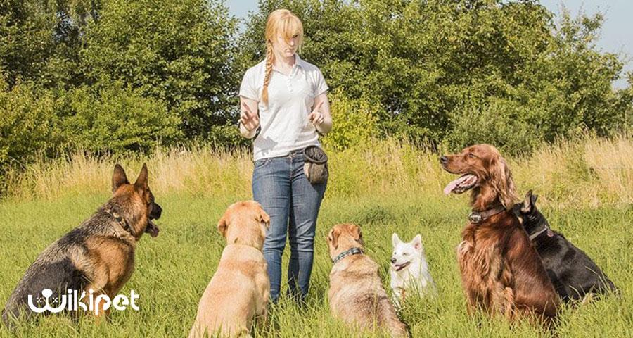 آموزش 5 دستور بسیار مهم به سگ