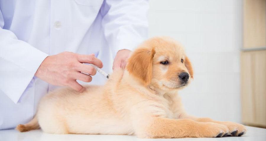 اهمیت واکسیناسیون در سگ ها