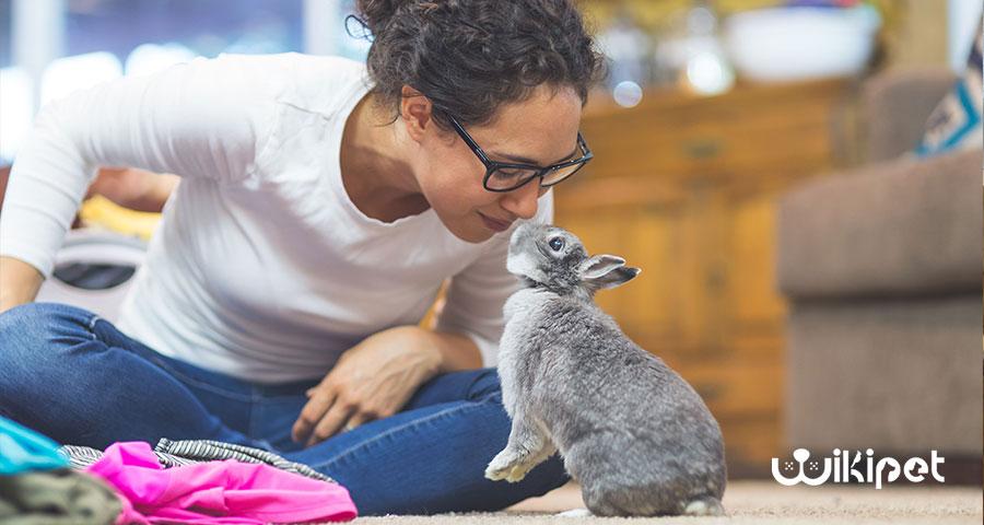 آموزش دستشویی به خرگوش