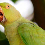 افسردگی در پرندگان – چگونه متوجه ناراحت بودن پرنده خود شویم