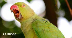 افسردگی در پرندگان؛ ویکی پت